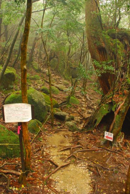 辻峠から太鼓岩への登山道の入口
