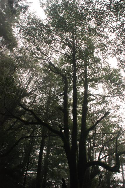 辻峠_雨上がりに輝く森
