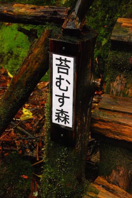 白谷雲水峡_屋久島_苔むす森の標識