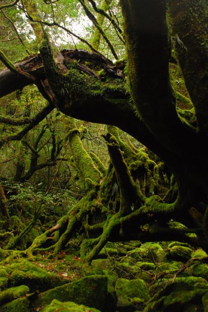 多様性に富んだ屋久島の苔