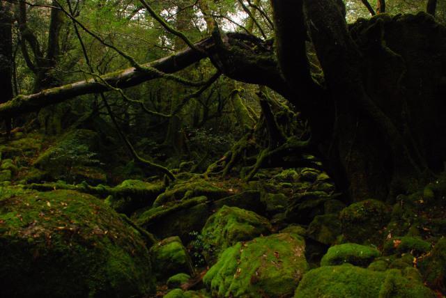 白谷雲水峡_苔むす森
