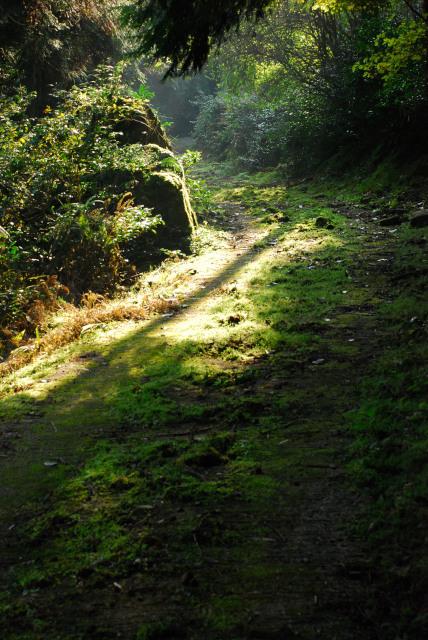 三岳登山道_コケに覆われた林道