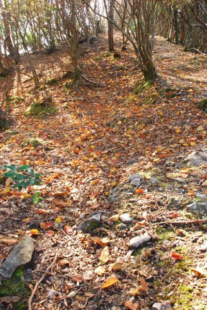 三岳登山道_西ヶ嶽への登り_落ち葉の道