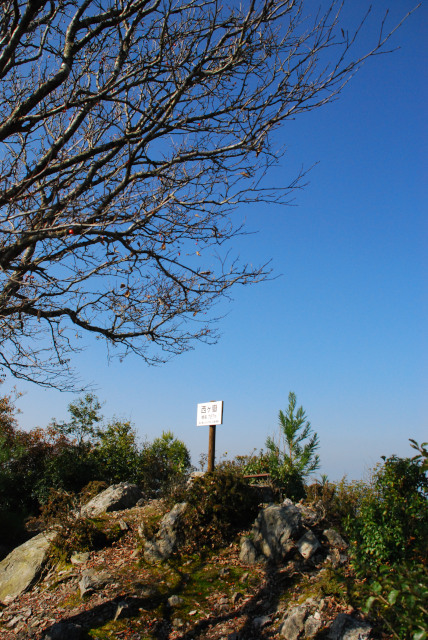 三岳登山道_トゲのある樹