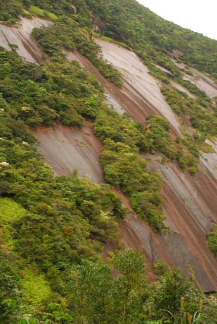 千尋滝_花崗岩の滑らかな斜面に植物がしがみつくように生えている