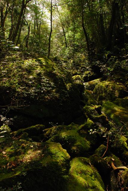 モッチョム岳_登山道_岩と木の根の急斜面