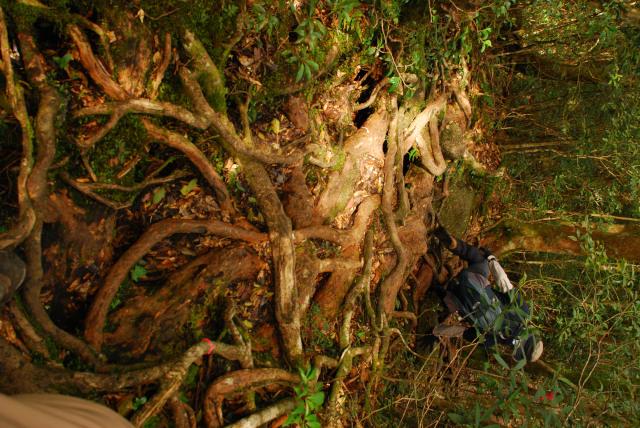 モッチョム岳_登山道_木の根が張り巡らされた急斜面