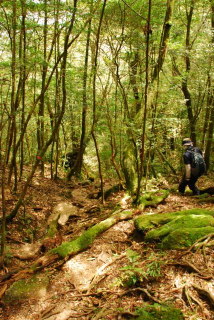 モッチョム岳_森の登山道