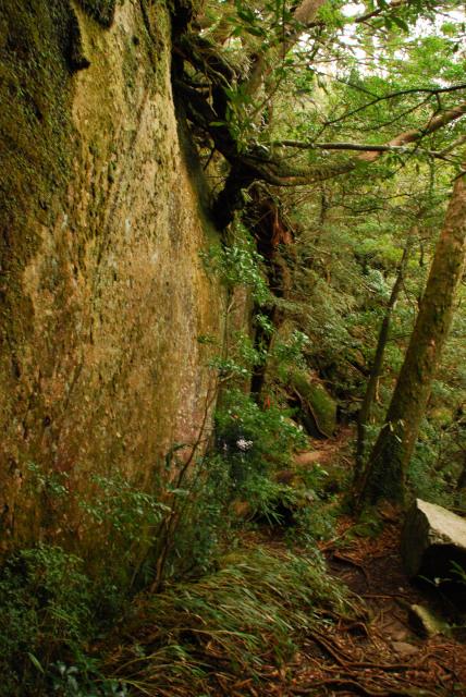 モッチョム岳_登山道_岩の下の巻き道