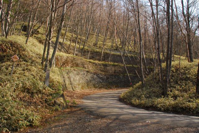 男体山の登山道_途中で林道を横切る