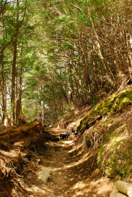 岩場の急登と樹林帯の水平道が繰り返す