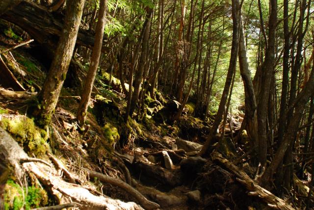 男体山の登山道_短い樹林帯の水平道でホッと一息