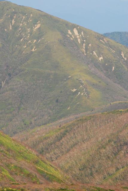 三本槍から裏那須三山へ続く笹原の雄大な尾根