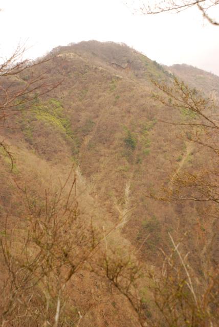 樹々の間から見えた鍋割山
