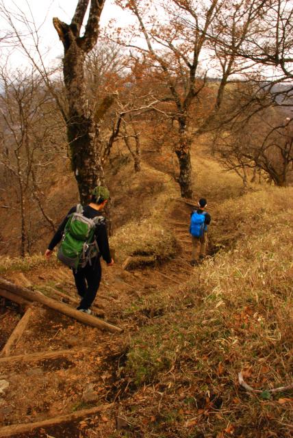 丹沢山から尊仏小屋へ登山道を戻る