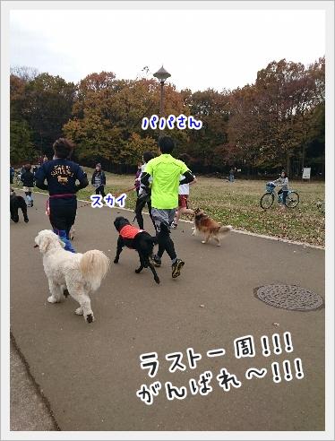 fc2_2016-11-28_08.jpg