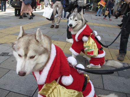 ハスキーズ・クリスマスウォーク2016