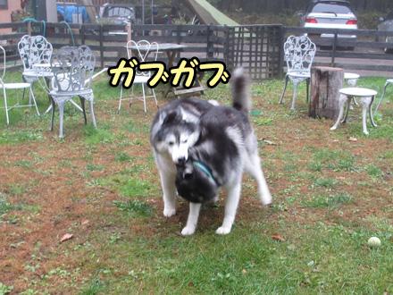 軽井沢3日目の朝