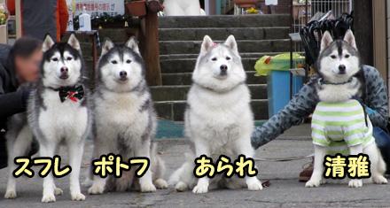 ハスまみれ幹事犬
