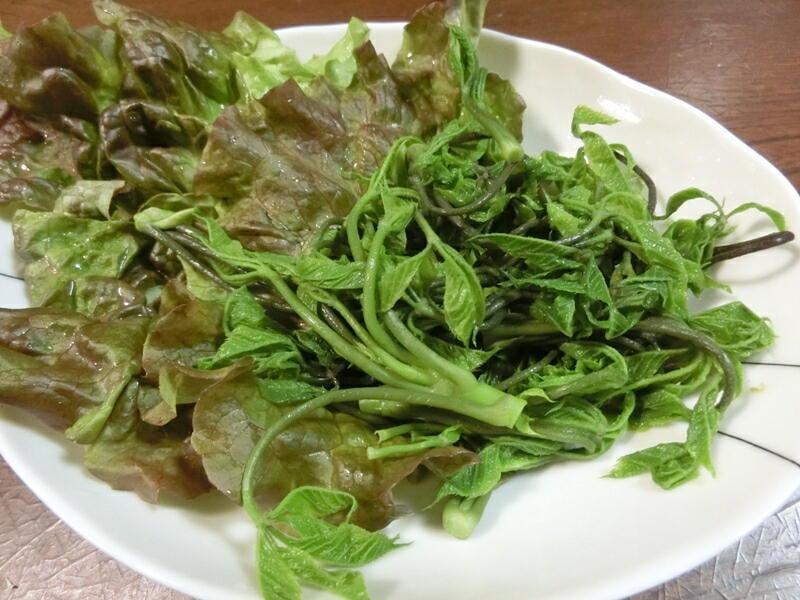 コシアブラのサラダ