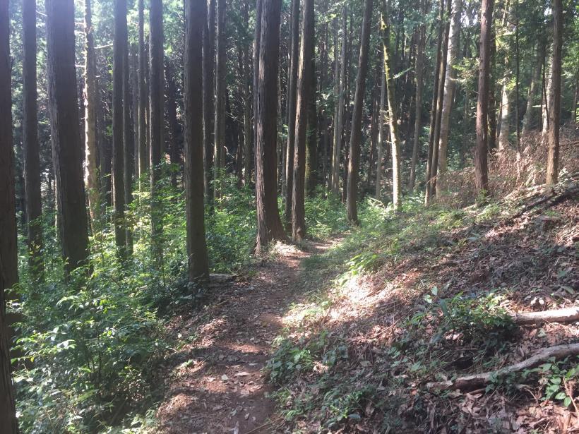kashiwagiyama33.jpg