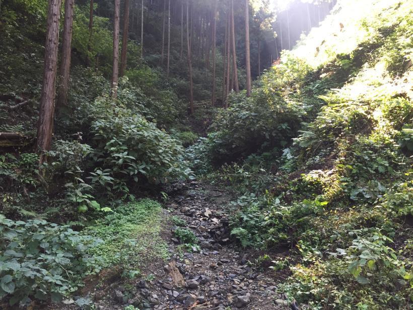 kusatoyama24.jpg