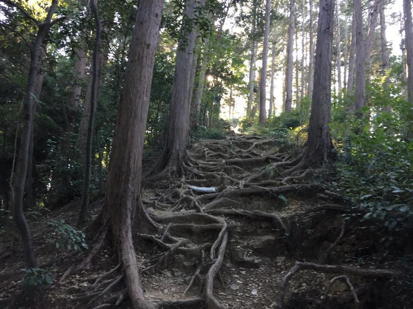 kusatoyamaA111.jpg