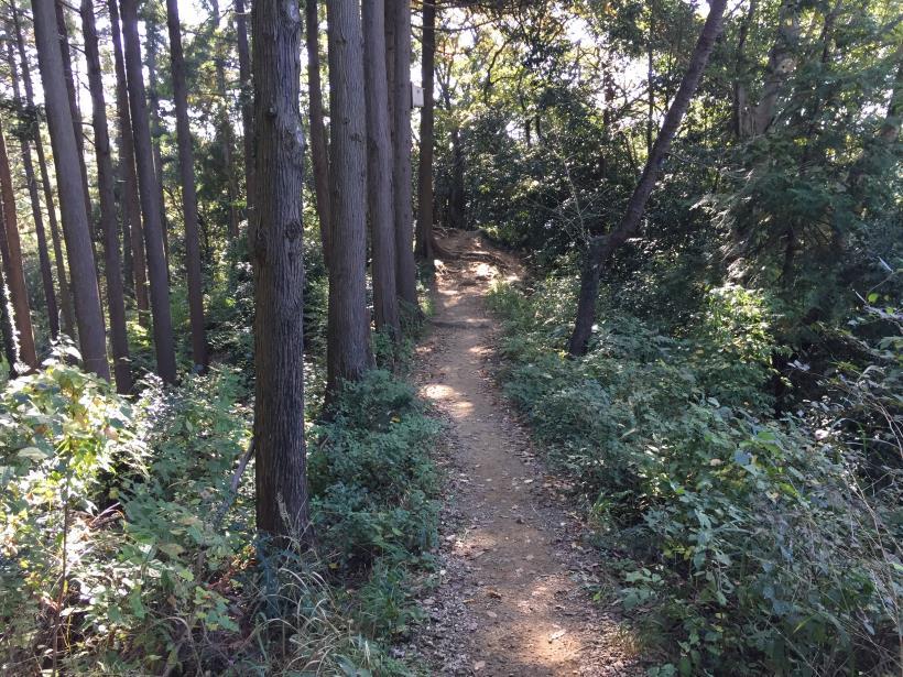 kusatoyamaA58.jpg