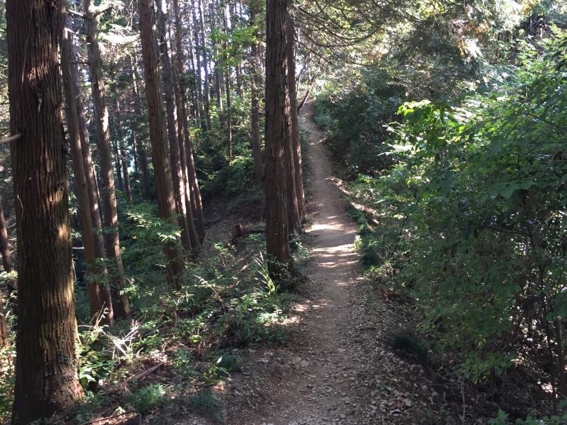 kusatoyamaA60.jpg