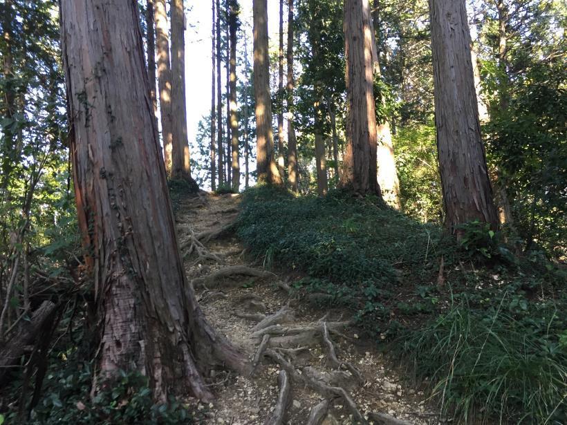 kusatoyamaA93.jpg