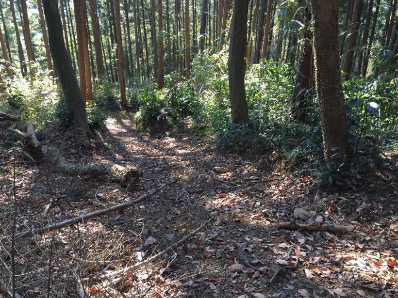 mahikisawakazamaki101.jpg
