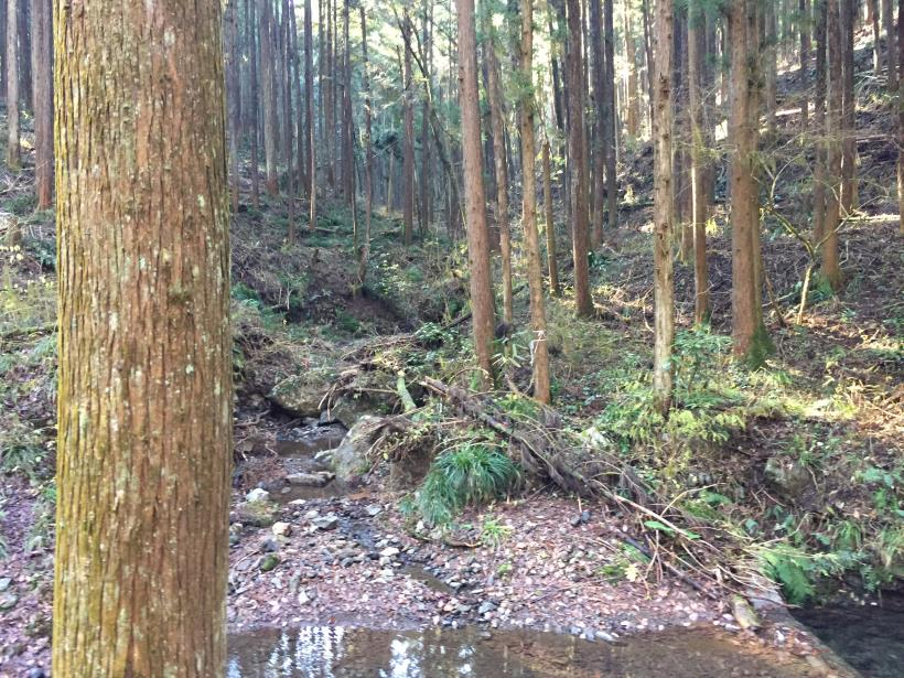 mahikisawakazamaki12.jpg