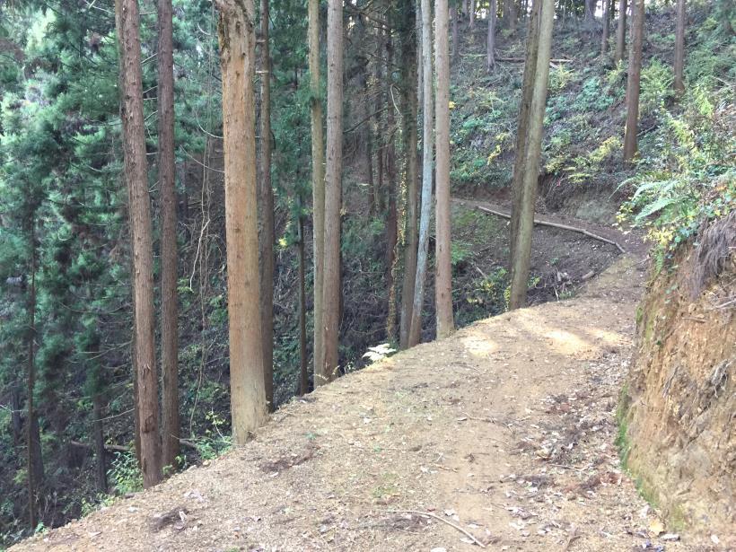 mahikisawakazamaki123.jpg