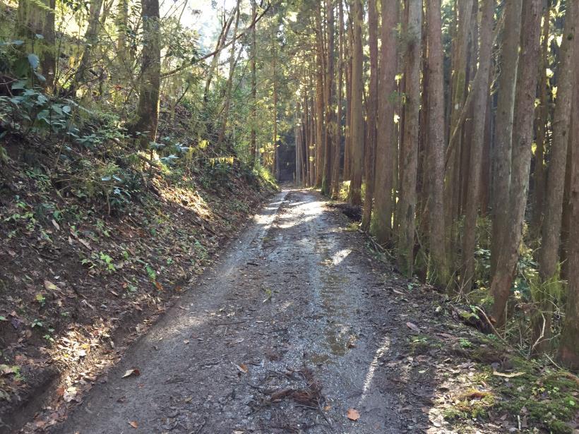 mahikisawakazamaki14.jpg