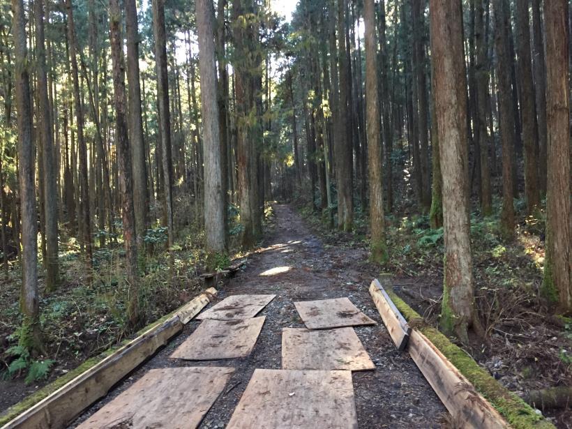 mahikisawakazamaki17.jpg
