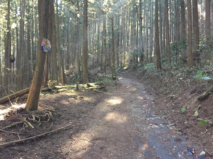 mahikisawakazamaki18.jpg