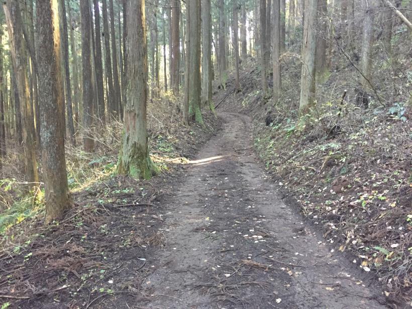 mahikisawakazamaki24.jpg