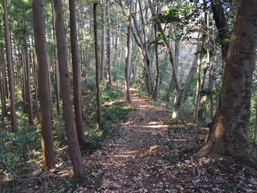 mahikisawakazamaki71.jpg