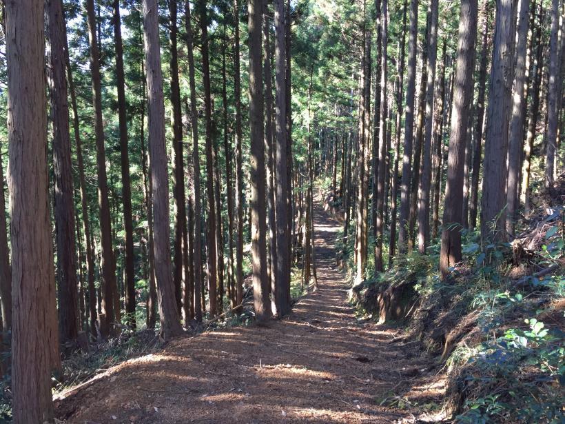 mahikisawakazamaki87.jpg