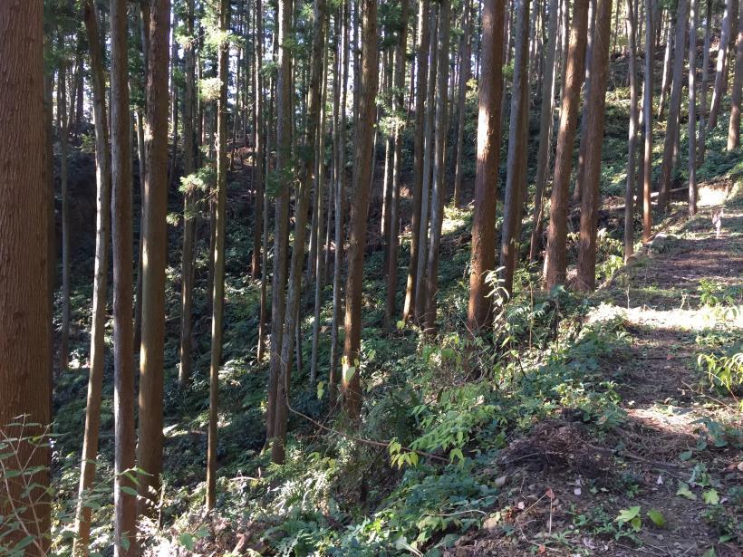 mahikisawakazamaki90.jpg