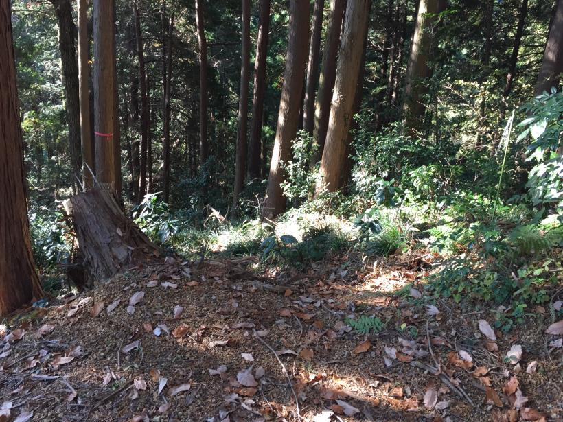 mahikisawakazamaki96.jpg