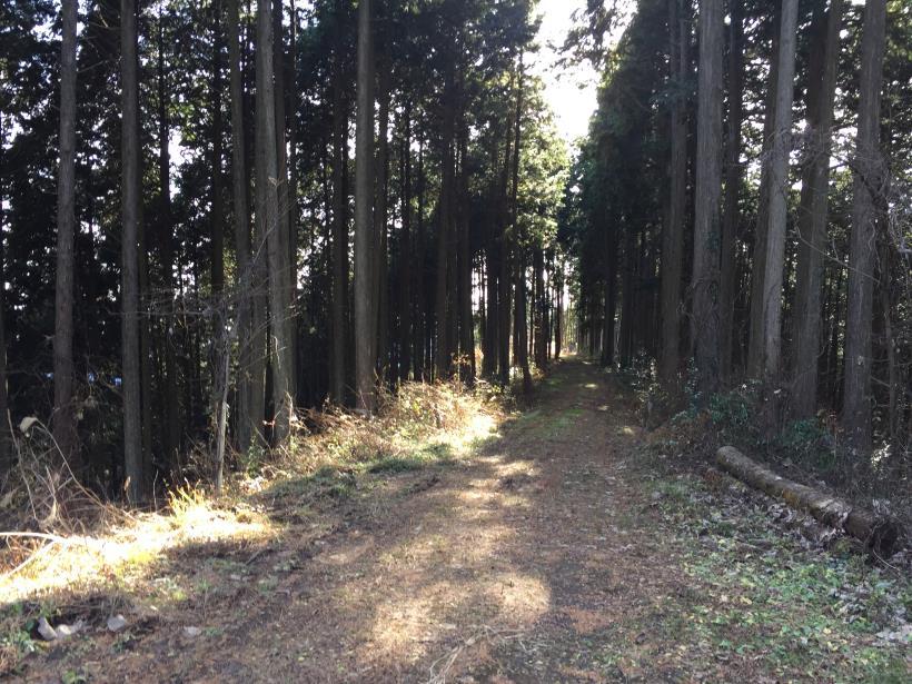 umenokidaizawa35.jpg