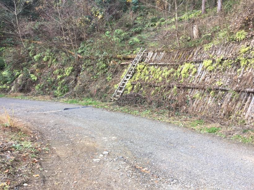 umenokidaizawa90.jpg