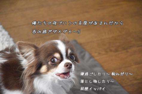 DSC07441211.jpg