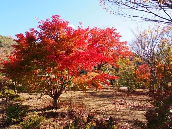 mizugaki-20161103-16s.jpg