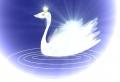 swan08-3.jpg