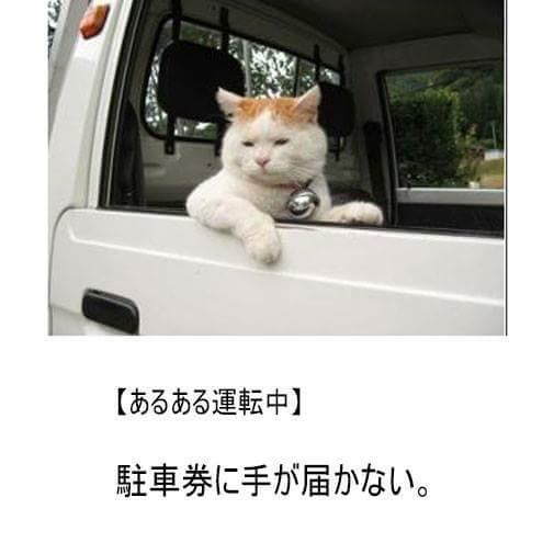 手足短いから(^_^;)