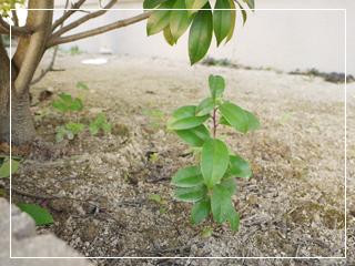 garden2016-108.jpg