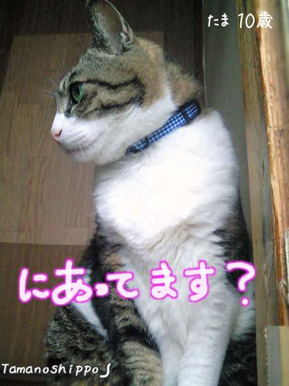 ポーズを決めるたま(10歳の誕生日)神戸工房のエスケープカラー