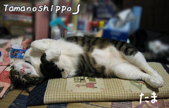 リラックスして寝る猫(たま)3歳と4ヶ月